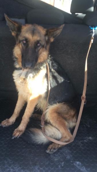 cane recuperato circonvallazione polizia stradale (1)