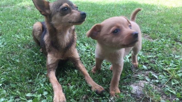 cani abbandonati cappelle sul tavo lungofiume (1)