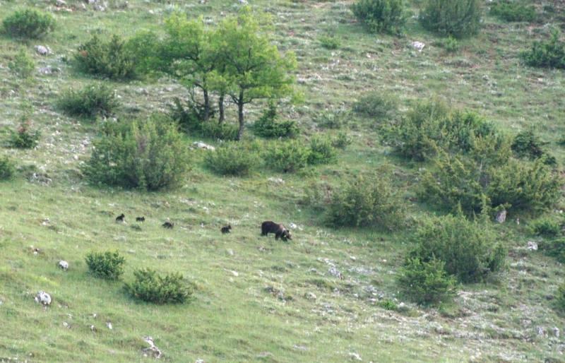 orsa-cuccioli-1