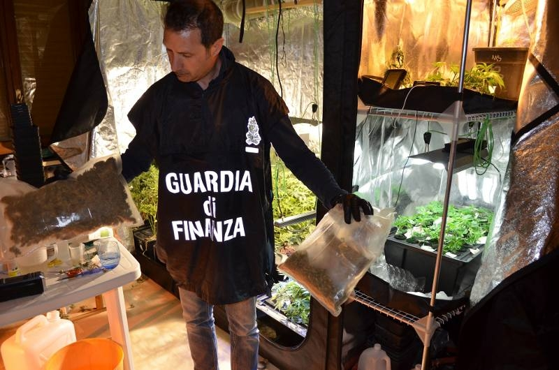 serra-marijuana-casa-guardia-finanza-1