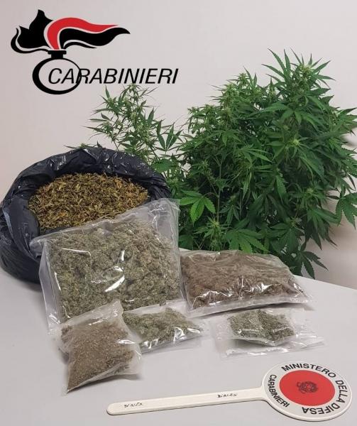marijuana-serra-casa-carabinieri-1