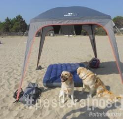 spiaggia libera cani