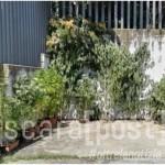 piante sequestrate elice