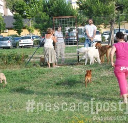 dog village montesilvano