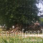albero caduto via rigopiano 16 giugno