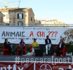 animale a chi