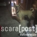 adozione-del-cuore-cani-citta-santangelo-2