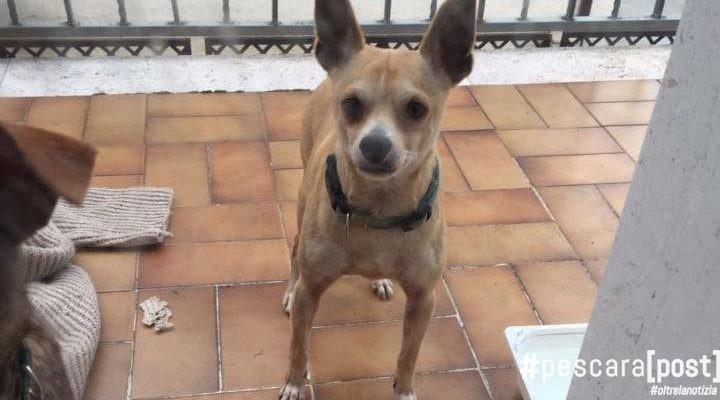 adozione-del-cuore-cani-citta-santangelo-4