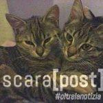 adozione-gatti-thelma-e-louise-4