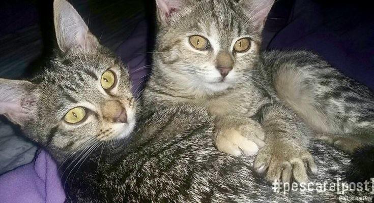 adozione-gatti-thelma-e-louise-5