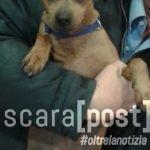 cane-smarrito-montesilvano-rocky-2