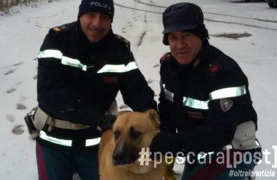 cane-pastore-tedesco-salvato-circonvallazione-5