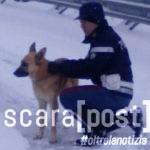 cane-pastore-tedesco-salvato-circonvallazione-montesilvano-2