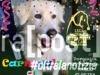 carnevale al parco florida lega cane