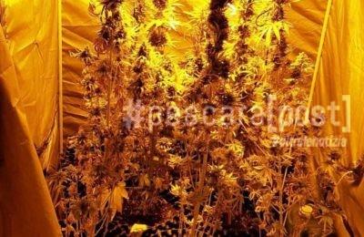 coltivazione marijuana casa