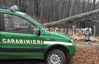 alberi tagliati san giovanni teatino carabinieri forestale
