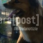 cane vagante via vestina montesilvano (4)