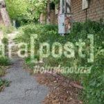 erba alta vegetazione incolta colli rancitelli (4)