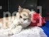 gatto piumino