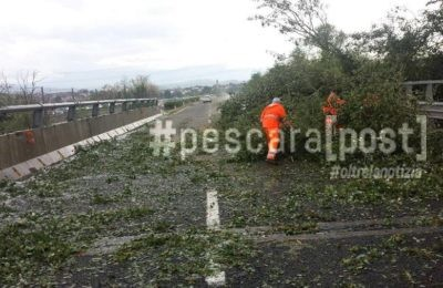 rami alberi autostrada a25